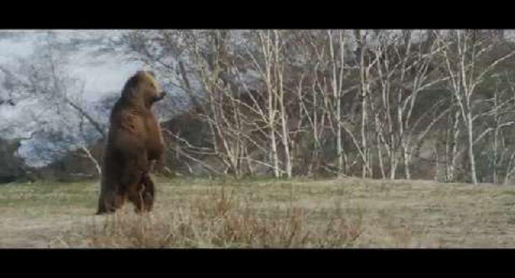 Im Land der Bären - Trailer