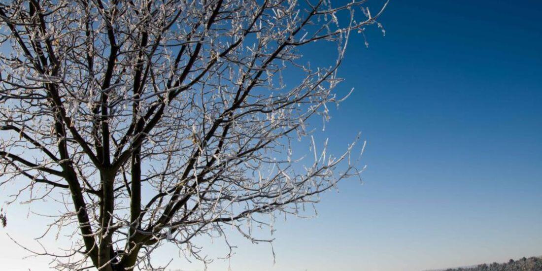 OD 0311_Winterbilder_Thomas Max