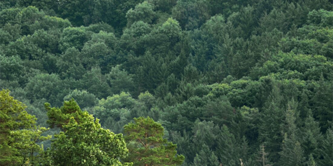 OD 0518 Eifel Nideggen–Engelsblick-Runde 2 hoch