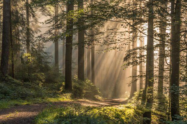 OD 0918 BW Special Fotowettbewerb 02 Schwarzwald