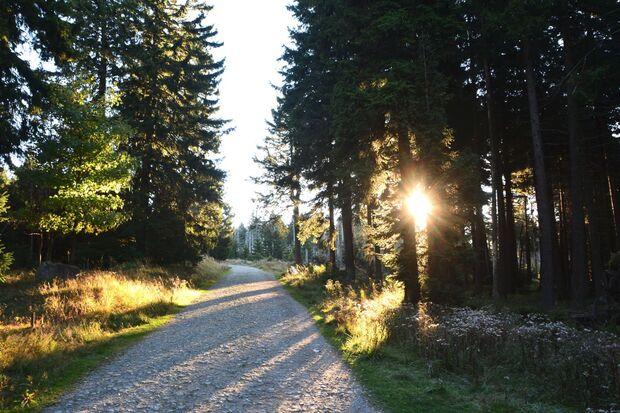 OD 2018 Harzer Hexen Stieg Brocken Nationalpark Harz