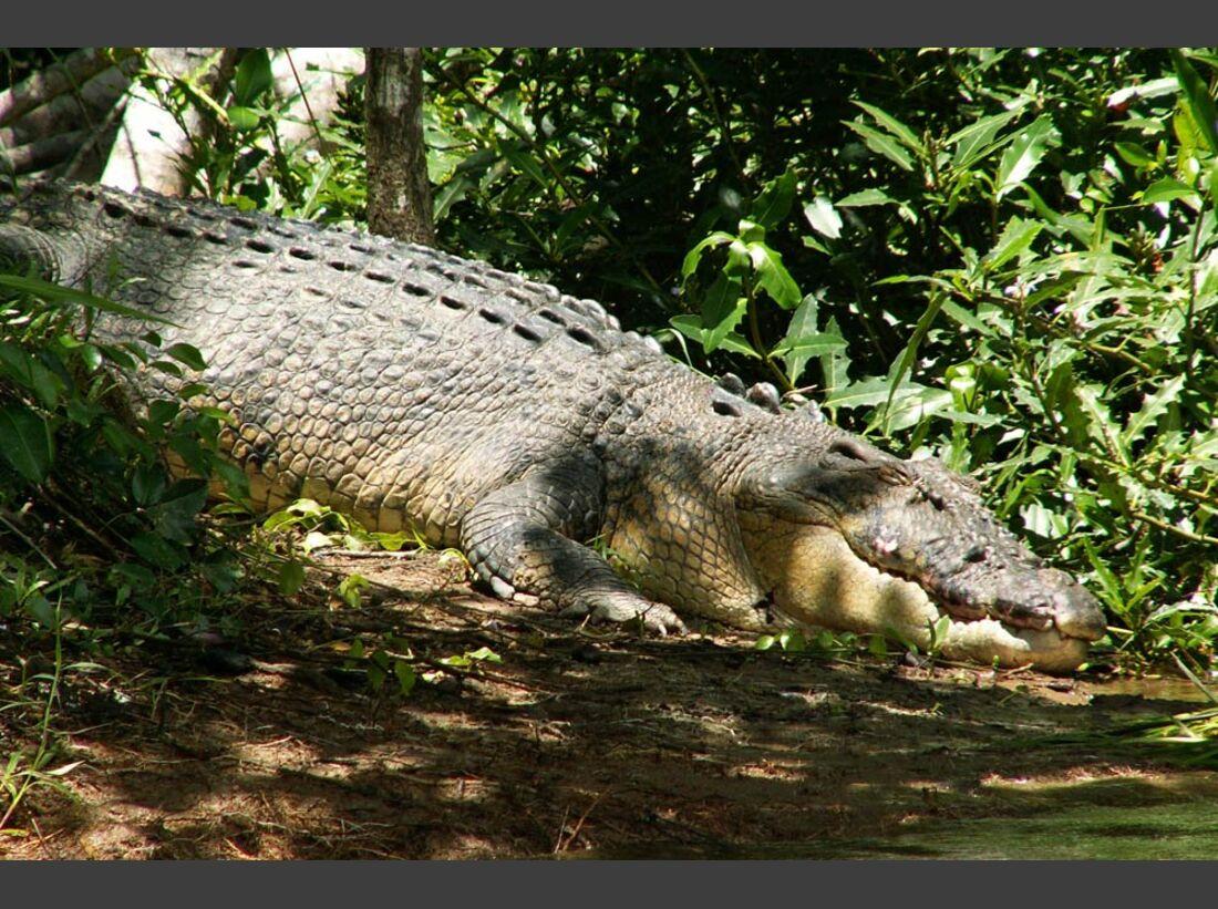 OD Basislager 2011_Krokodil Australien