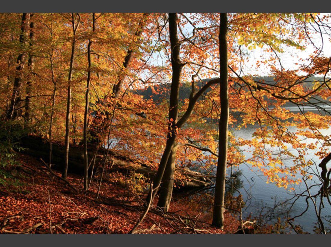 OD Baumwahl 2010 Buchenwald_am_Klarwassersee_G-klinger (jpg)
