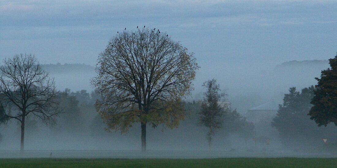 OD-DerWaldRuft-Aufm-Nebelmorgen_by_Hans-Udry_pixelio.de (jpg)