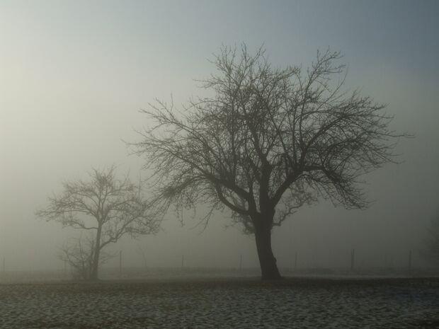 OD-DerWaldRuft-Aufm-nebel-190106-05_54174_by-DDD_Manfred_pixelio.de (jpg)