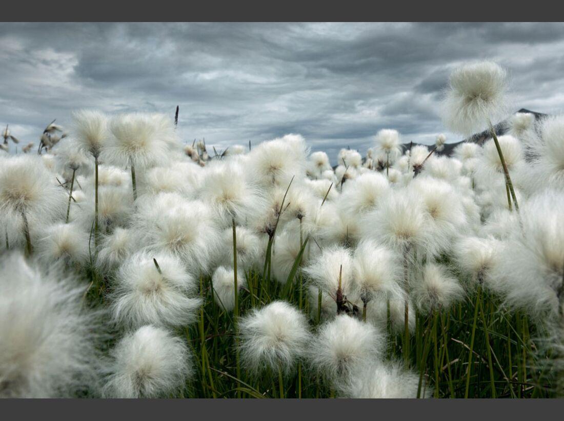 OD_GDT_2013_K4_05_Luciano_Gaudenzio_Baumwollfeld_unter_islaendischem_Himmel-Cotton_field_under_Icelandic_sky (jpg)
