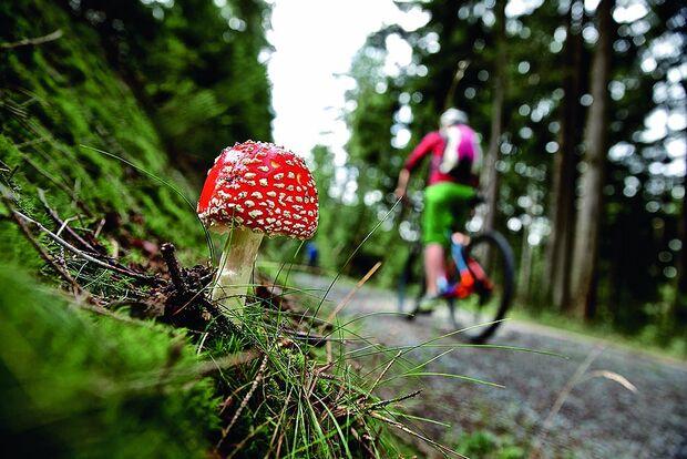 OD-SH-Bayern-2015-Frankenwald-Mountainbike-5