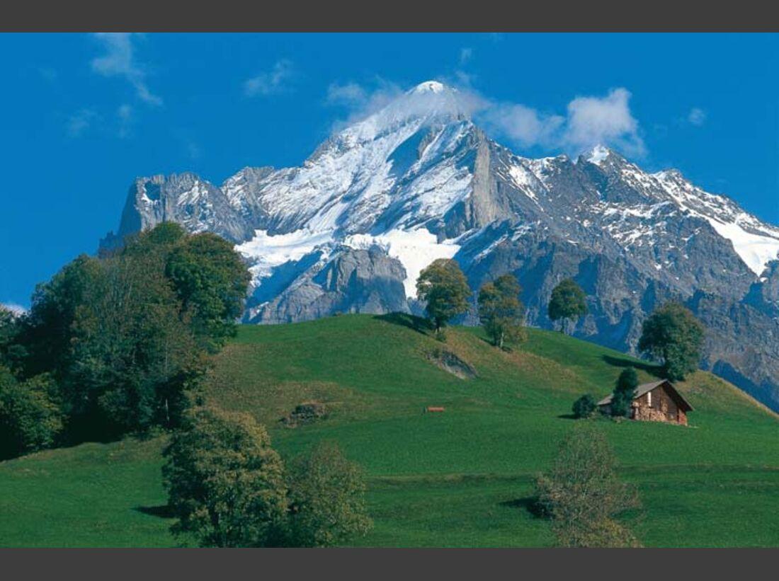 OD Scheideggwetterhorn