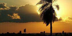 OD Sonnenuntergang in den Tropen