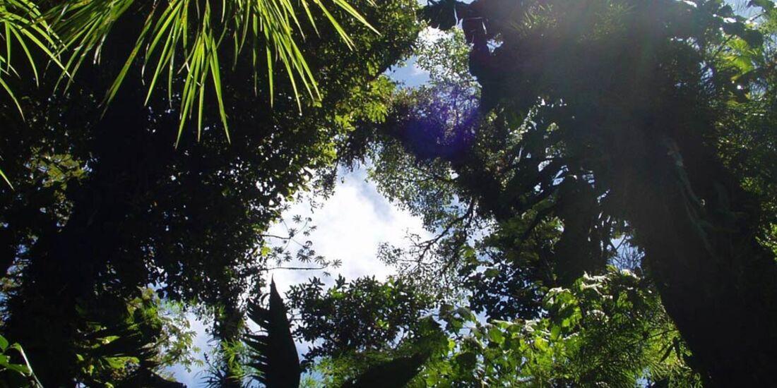OD Tropen Reise Regenwald Dschungel
