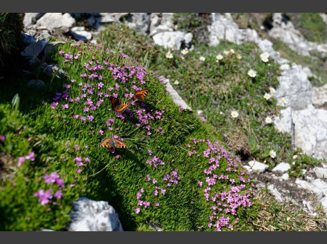 Praxistest in den Alpen: Bergschuhe  28