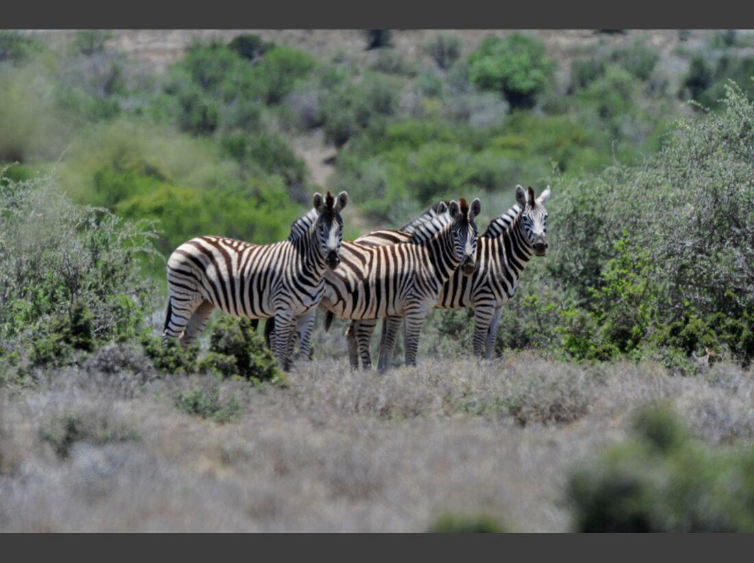 Südafrika zum Durchklicken 69