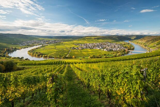 od-2016-wandern-in-rheinlandpfalz-Moselschleife bei Leiwen-Moselsteig (jpg)