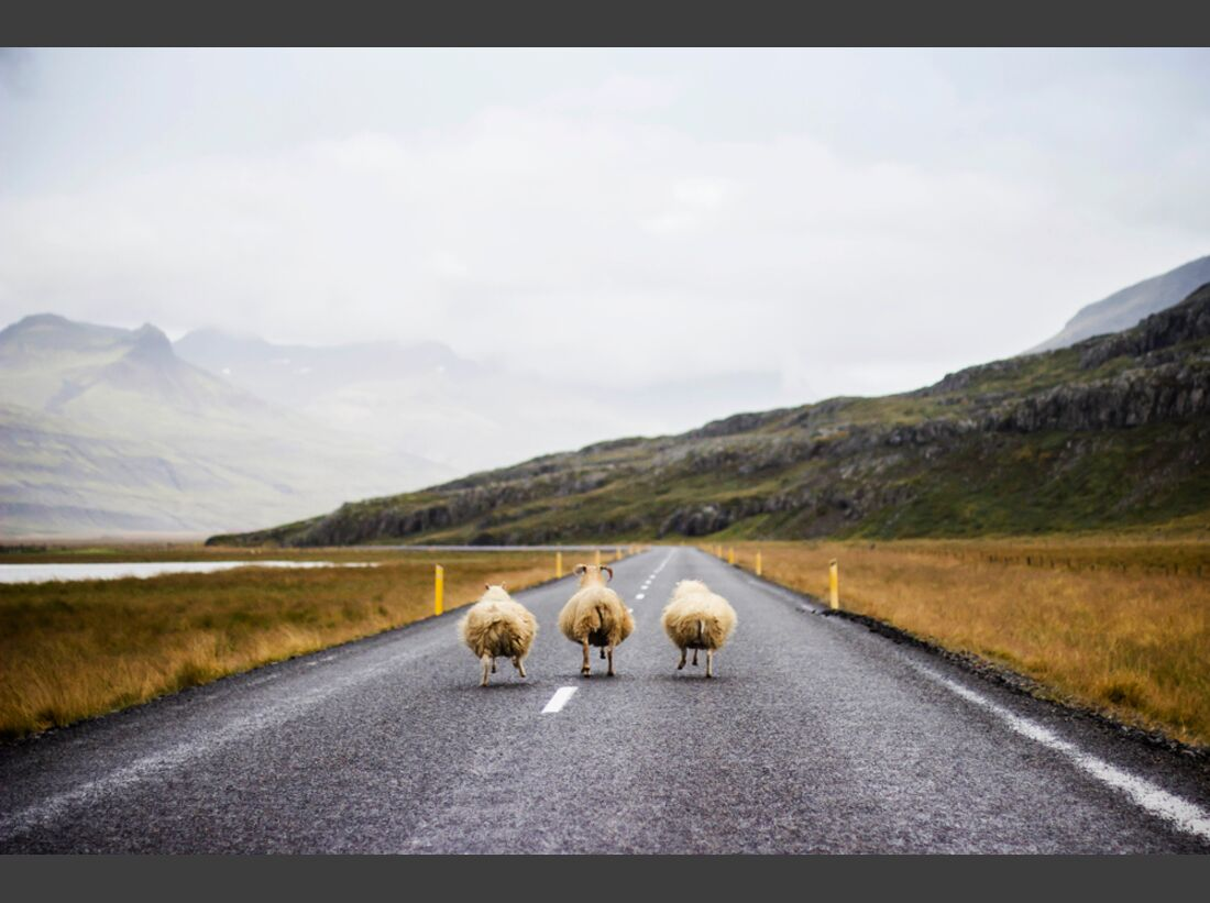 od-2017-cewe-fotowettbewerb-lauft-ihr-drei-lauft-terezie-fojtova (jpg)