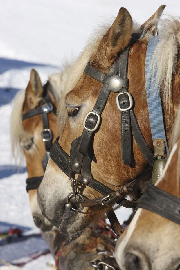 ps-2016-winter-wonderland-winterhighlights-sueden-tirol (jpg)